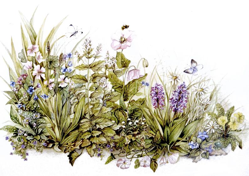 Ansichtkaarten - bloemen en kruiden ansichtkaart