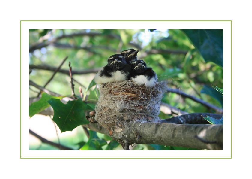 Ansichtkaarten - Lentekaart Jonge vogels