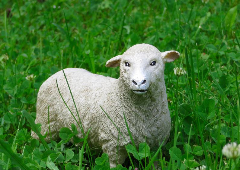 Ansichtkaarten - Speelgoed-schaap in het gras
