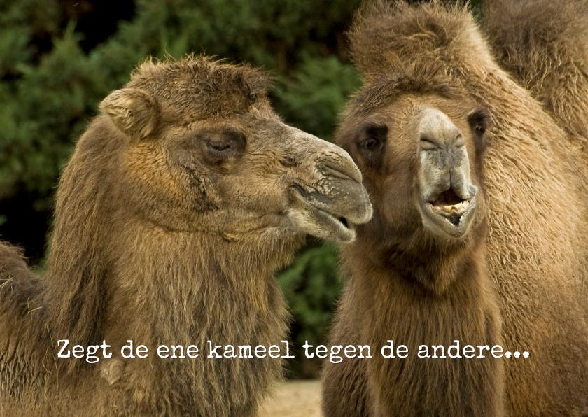 Ansichtkaarten - Zegt de ene kameel tegen de andere