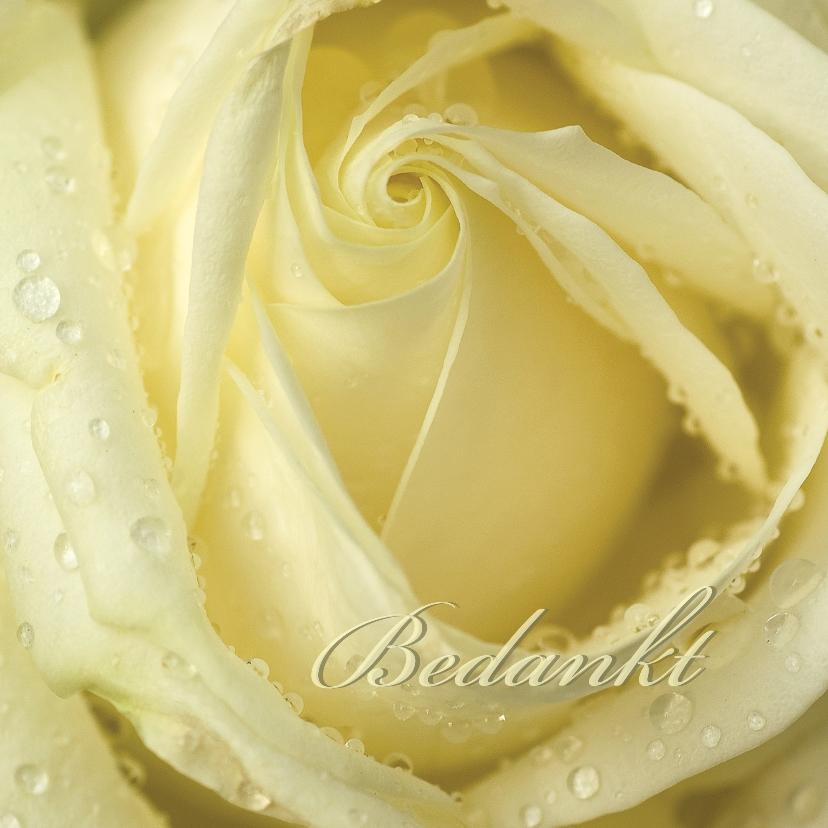 Bedankkaartjes - Romige roos bedankt tekst aanpasbaar