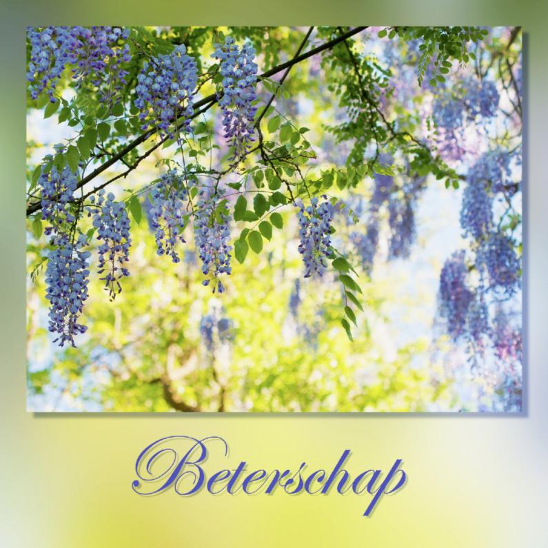 Beterschapskaarten - Beter met blauwe regen