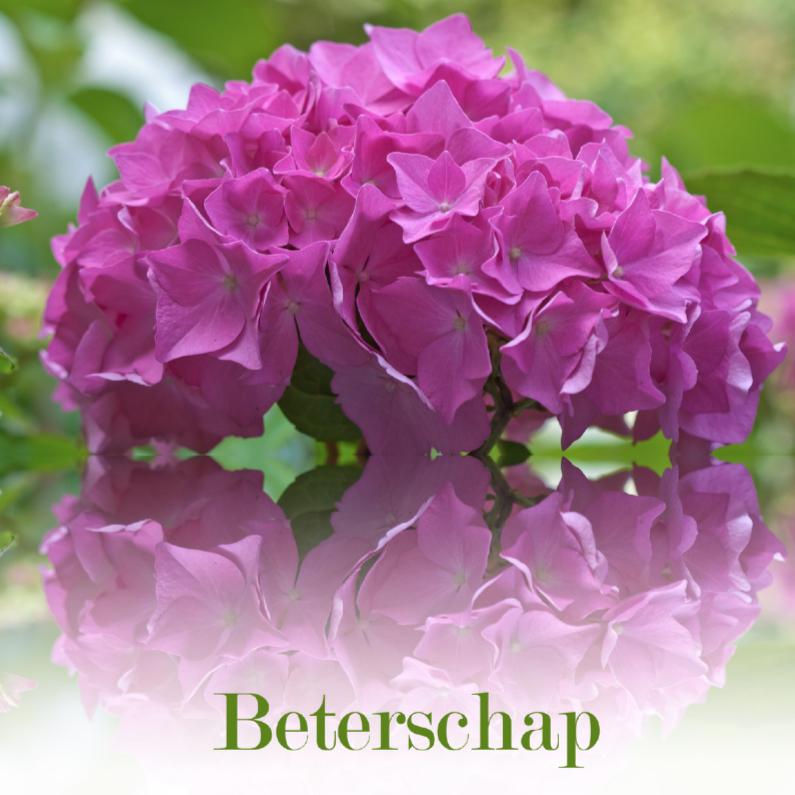Beterschapskaarten - Beter met hortensia