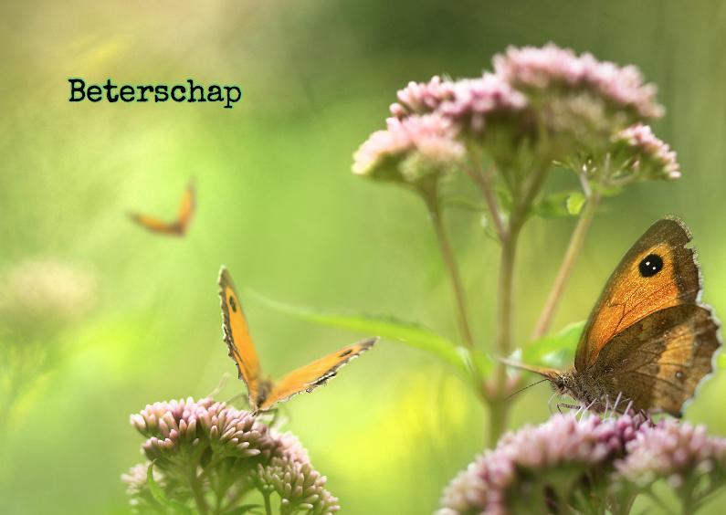 Beterschapskaarten - Beter met vlinders