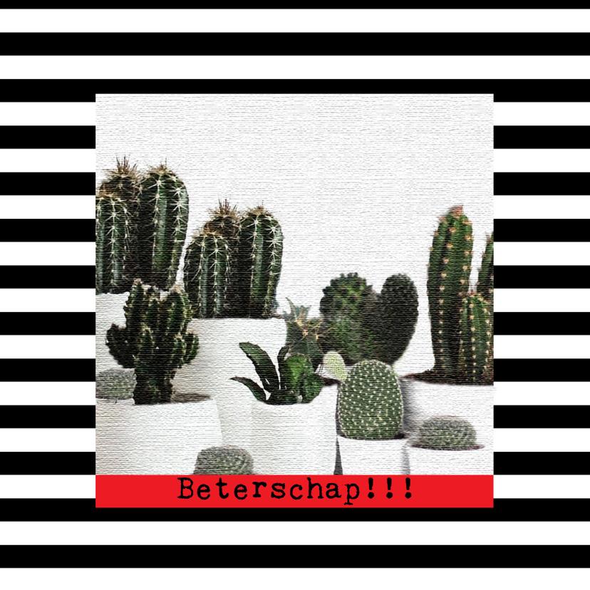 Beterschapskaarten - Beterschap- Cactussen