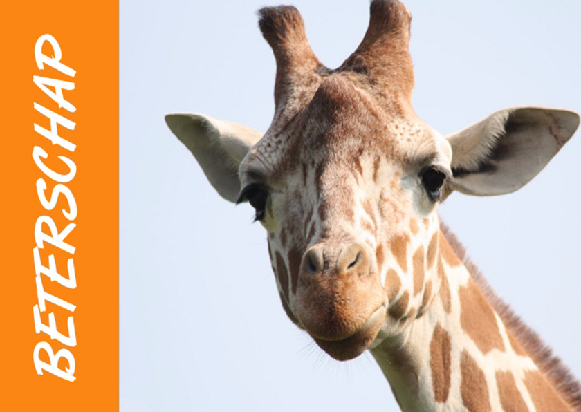 Beterschapskaarten - Beterschap en sterkte giraf