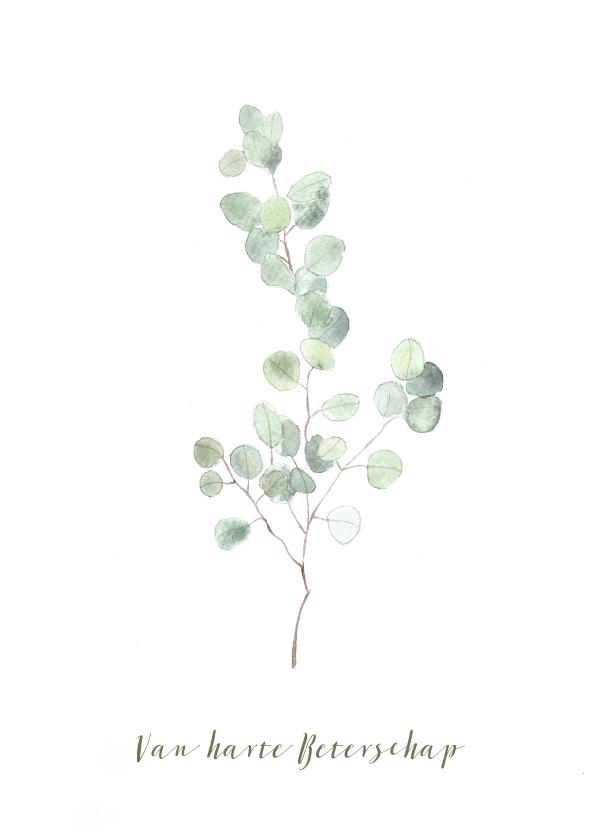 Beterschapskaarten - Beterschap kaart met eucalyptus tak - natuur