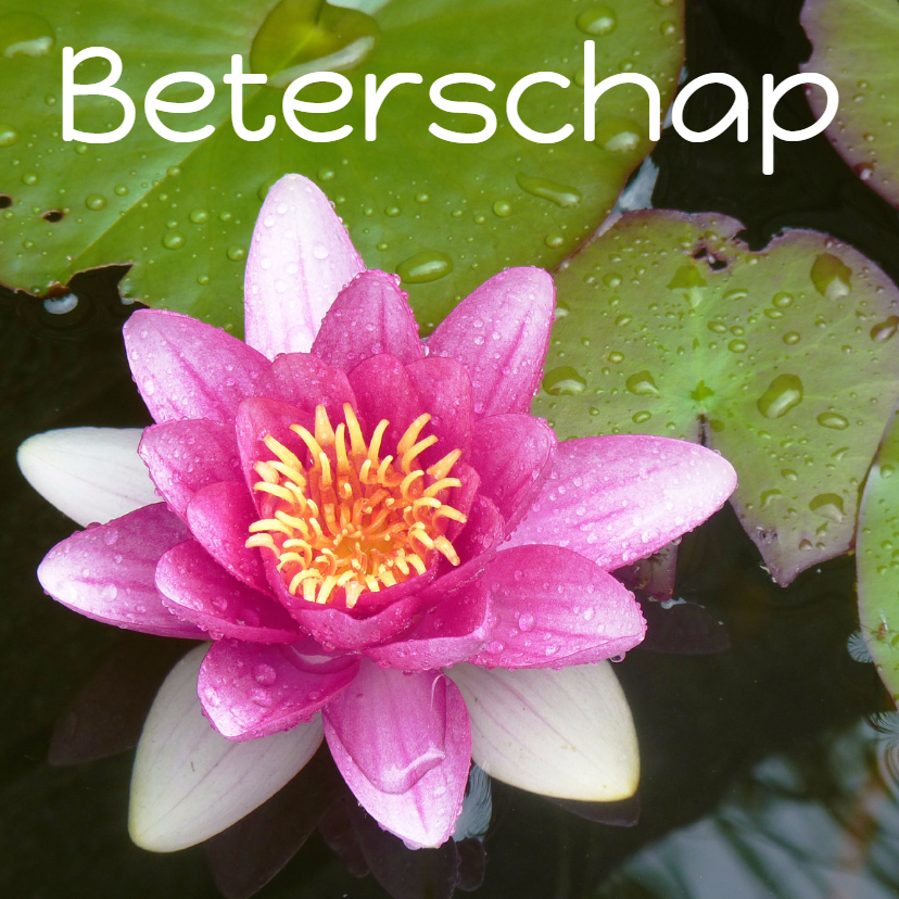 Beterschapskaarten - Beterschap Waterlelie