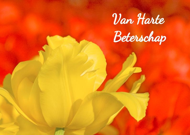Beterschapskaarten - Beterschapkaart - Tulpen