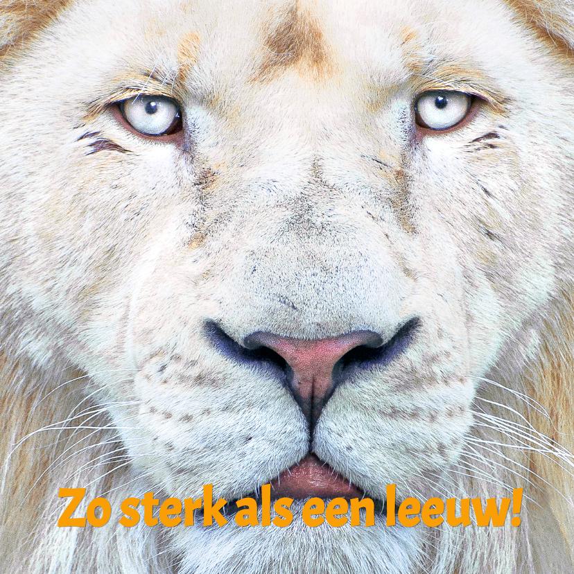 Beterschapskaarten - Beterschapkaart- Witte Leeuw