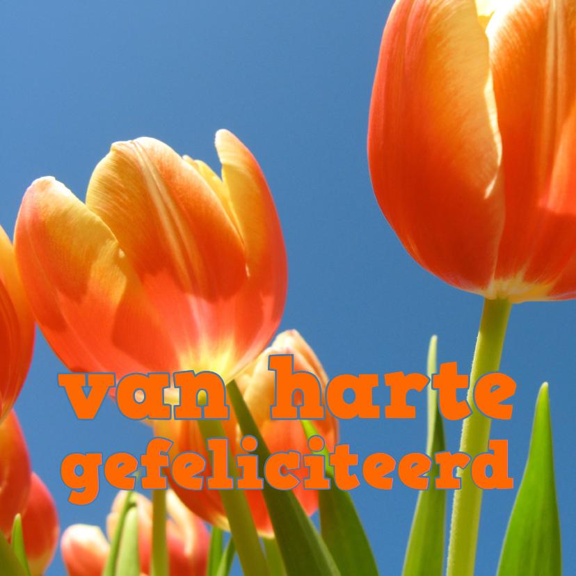 Beterschapskaarten - beterschapskaart tulpen Vl - LB