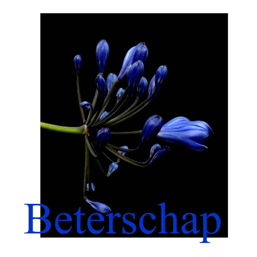 Beterschapskaarten - blueflower