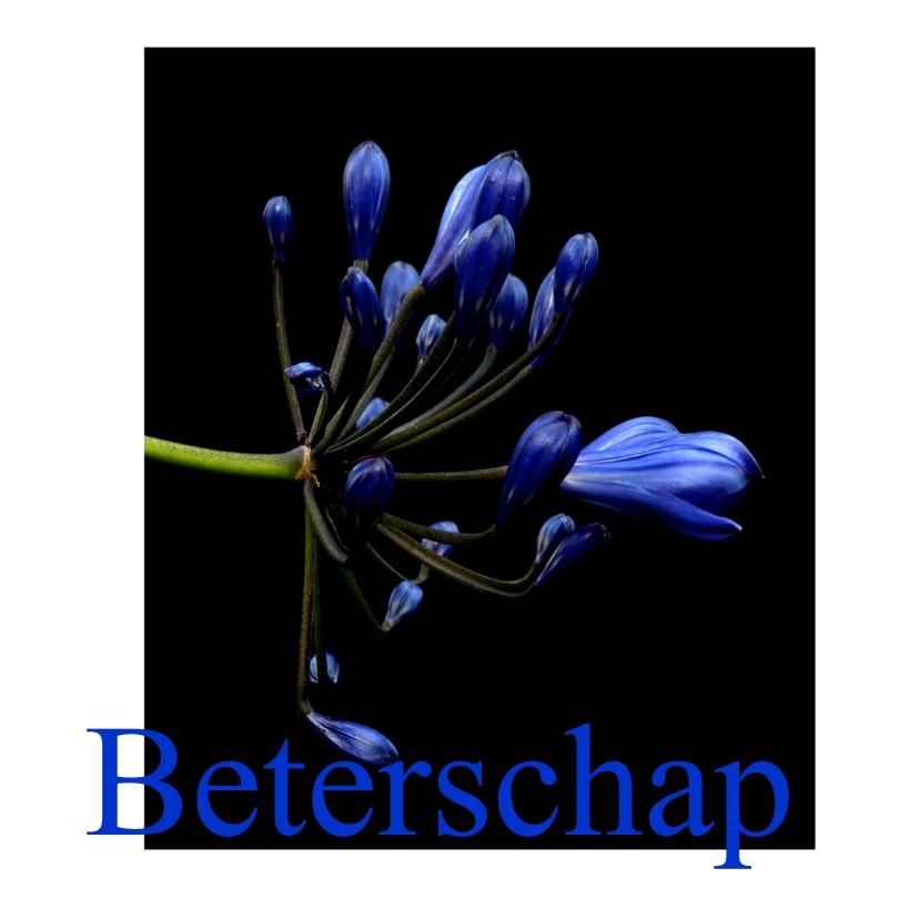 Beterschapskaarten - blueflower