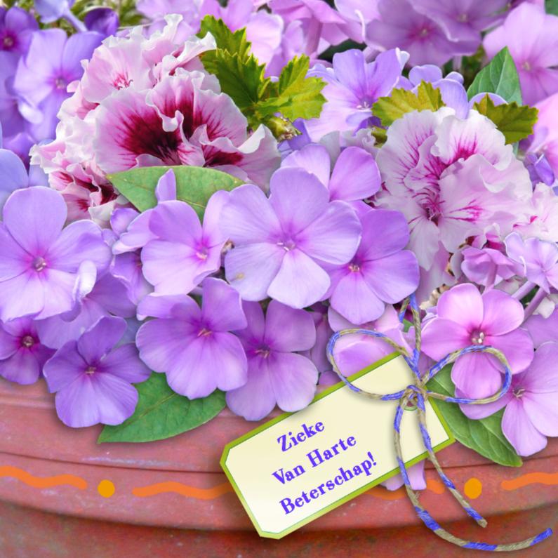 Beterschapskaarten - Floxen in pot lila met label