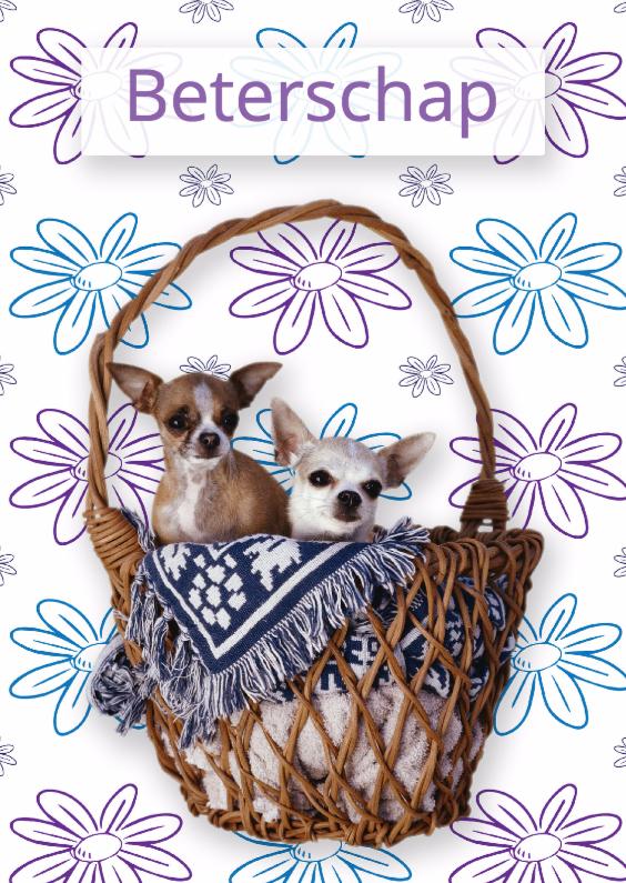 Beterschapskaarten - Honden beterschapskaart - Remco