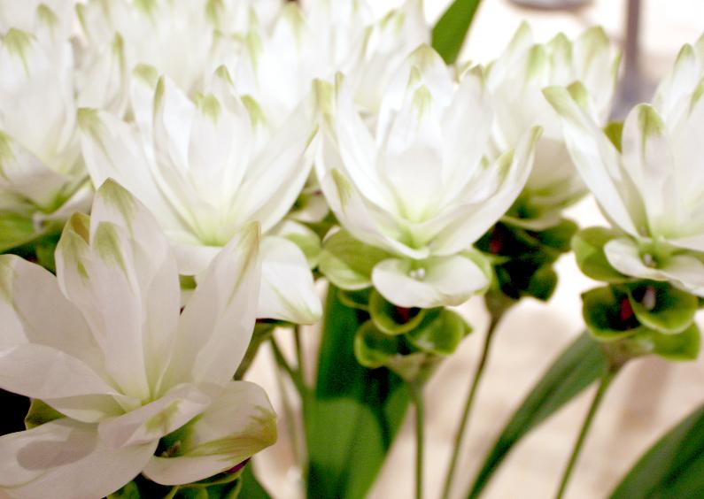 Beterschapskaarten - mooie witte bloemen
