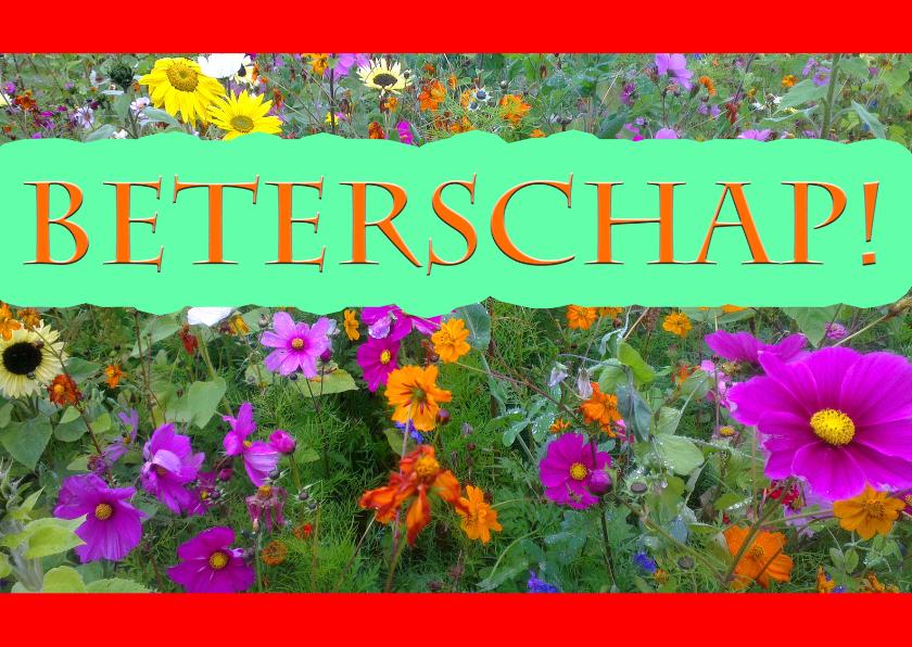 Beterschapskaarten - natuur bloemenkaart