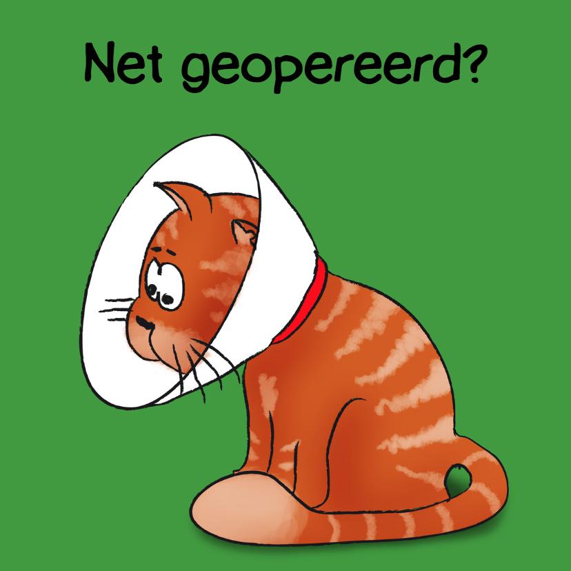 Beterschapskaarten - Net geopereerd - kat