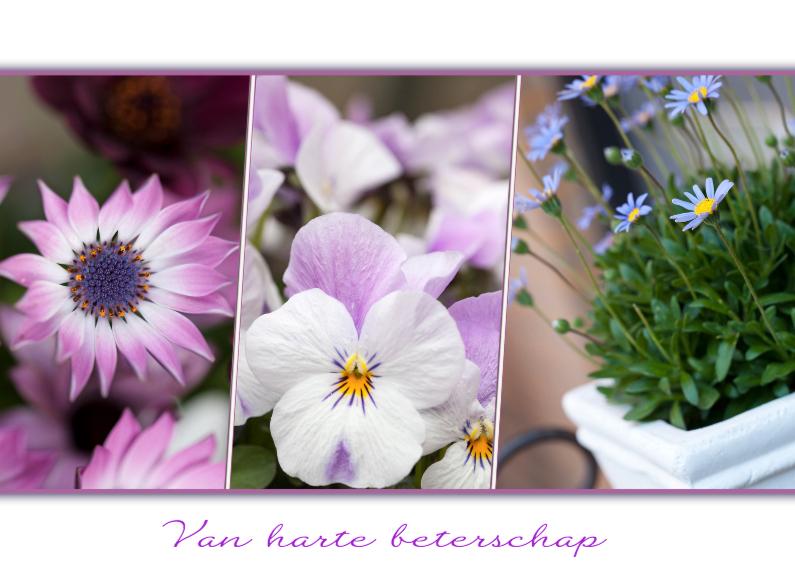 Beterschapskaarten -  paarse bloemencollage