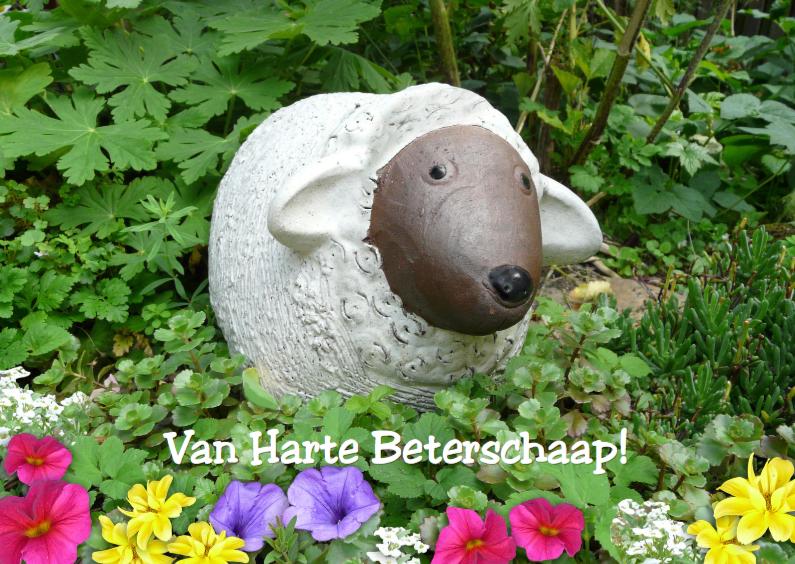 Beterschapskaarten - Van Harte Beterschaaap!