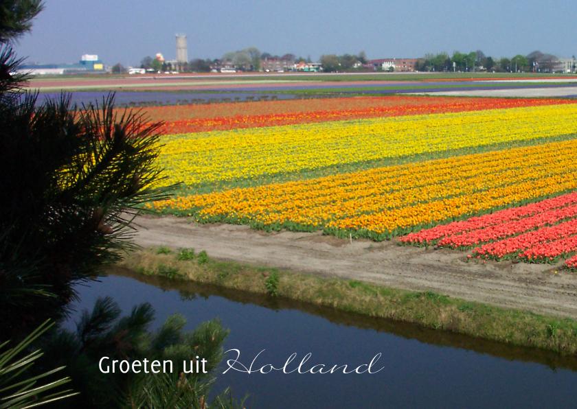 Bloemenkaarten - Ansicht Holland - bloembollen