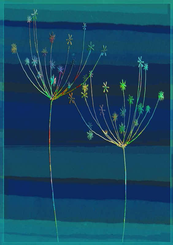 Bloemenkaarten - Bloemen in allerlei kleurtjes