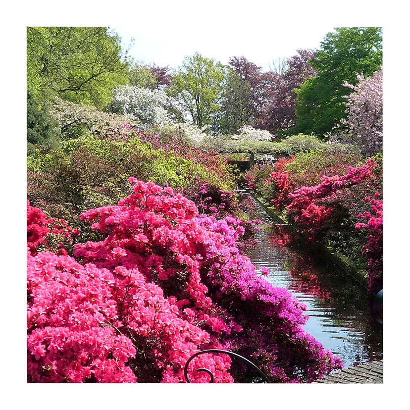 Bloemenkaarten - Bloemen Rododendron pracht