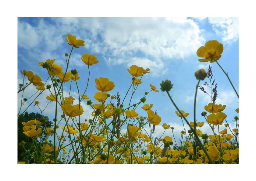 Bloemenkaarten - bloemenkaart boter bloemenveld