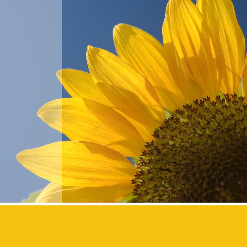 Bloemenkaarten - Bloemenkaart grote foto zonnebloem