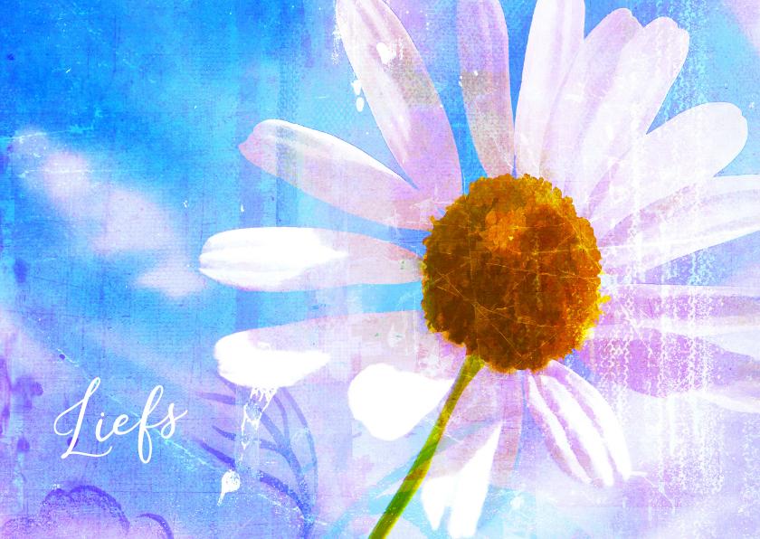 Bloemenkaarten - Bloemenkaart margrietje in kleur