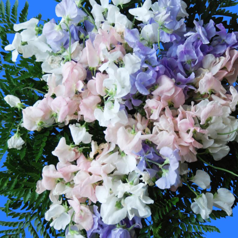 Bloemenkaarten - Bloemenkaart paars,roze,wit