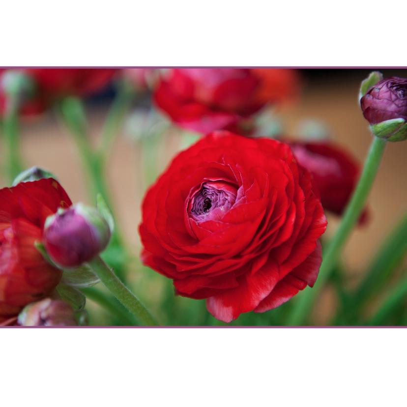 Bloemenkaarten - bloemenkaart ranonkel MM