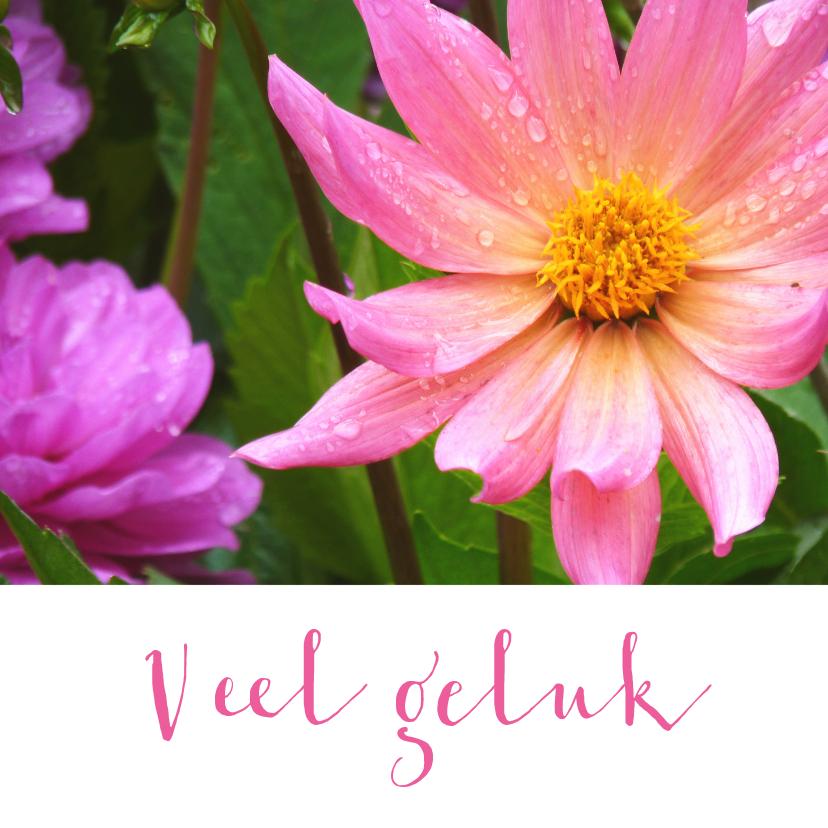 Bloemenkaarten - Bloemenkaart roze dahlia bloem