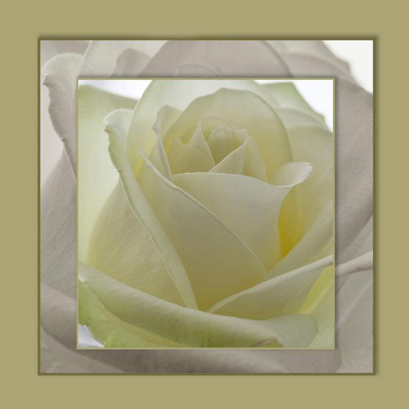 Bloemenkaarten - bloemenkaart rozen MM