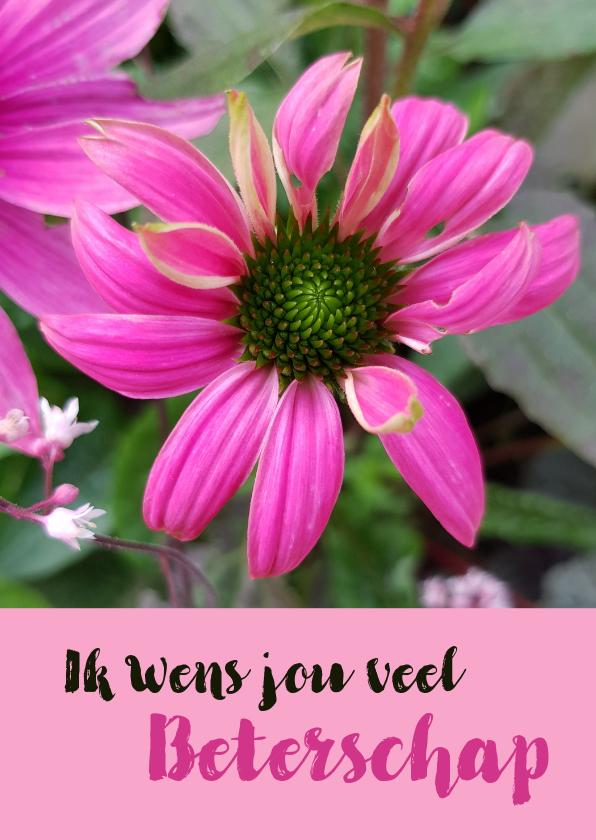 Bloemenkaarten - Bloemenkaart - Zonnehoed of Echinacea