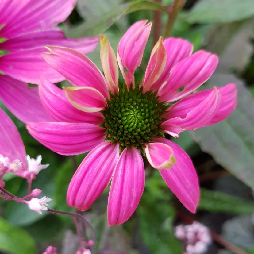 Bloemenkaarten - Bloemenkaart - Zonnehoed speciaal voor jou