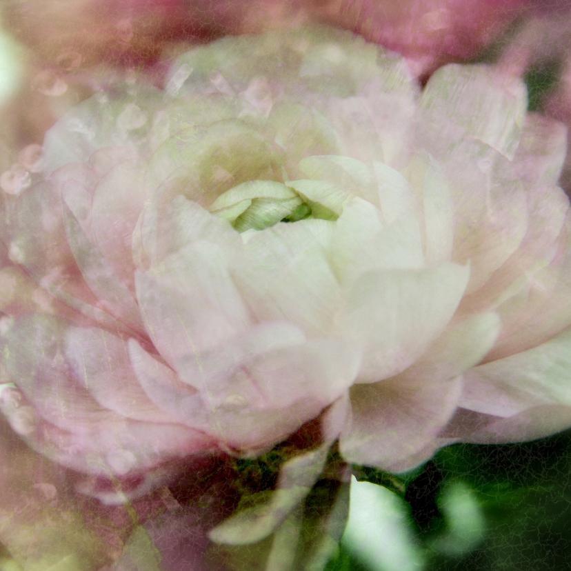 Bloemenkaarten - Bloemenkaarten Pioenroos sfeer Y