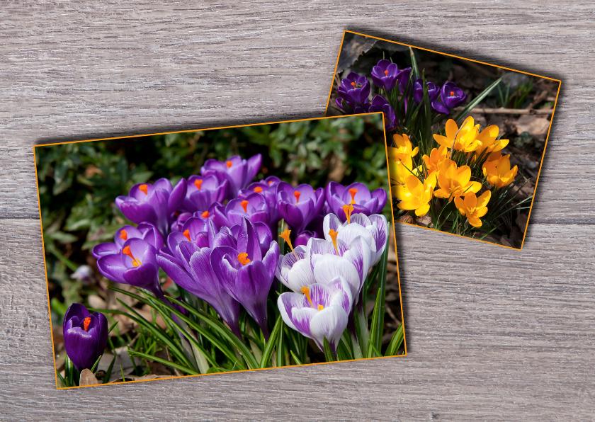 Bloemenkaarten - Bloemenkaarten voorjaar MM