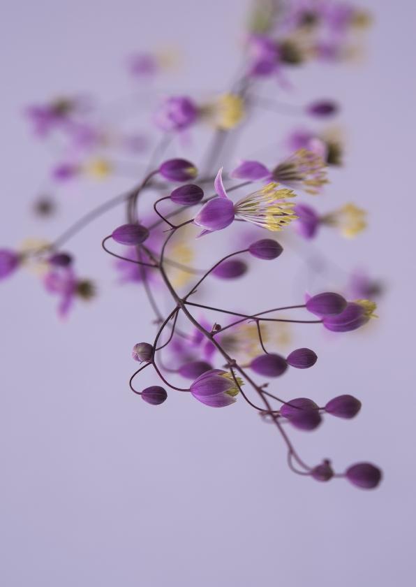 Bloemenkaarten - bloemkaart, lila thalictrum