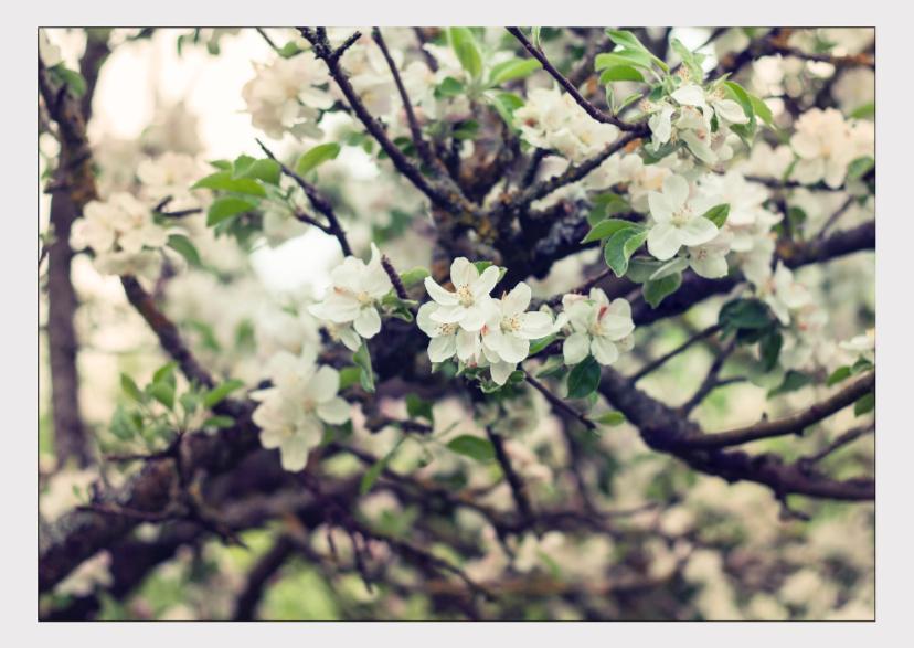 Bloemenkaarten - Blossom tree