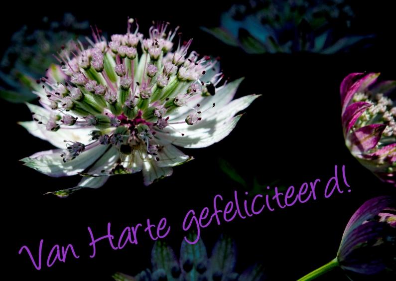 Bloemenkaarten - color flowers
