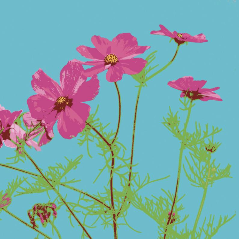 Bloemenkaarten - Cosmea
