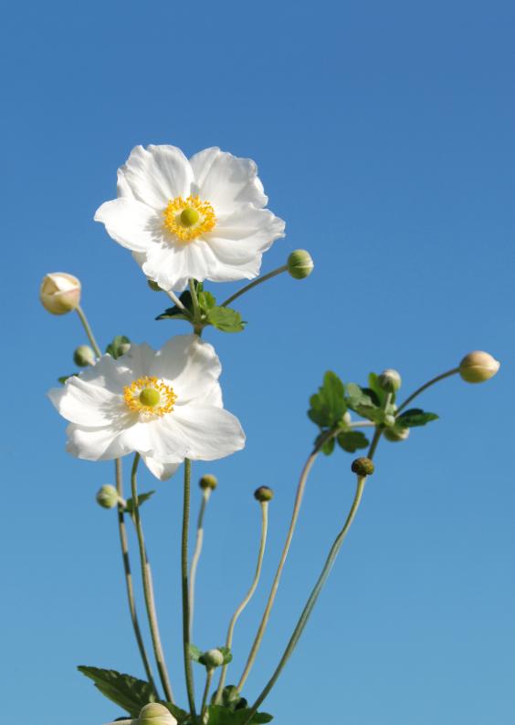 Bloemenkaarten - Foto met mooie witte bloemen