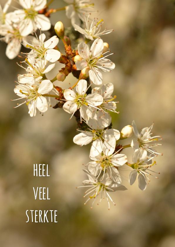 Bloemenkaarten - Hangend bloesemtakje