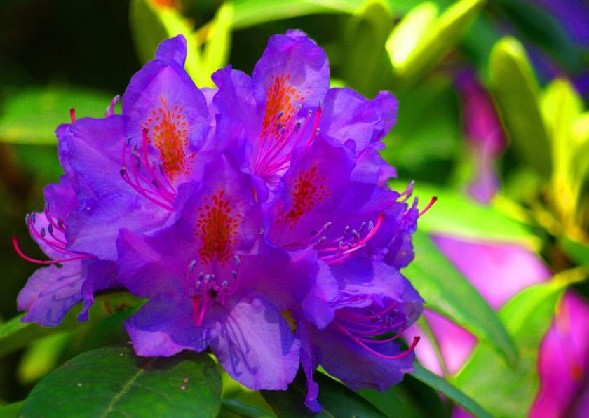 Bloemenkaarten - Lente vrolijk