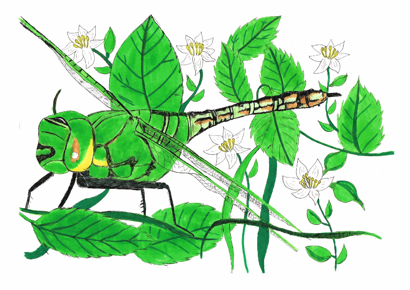 Bloemenkaarten - Libelle met bramen