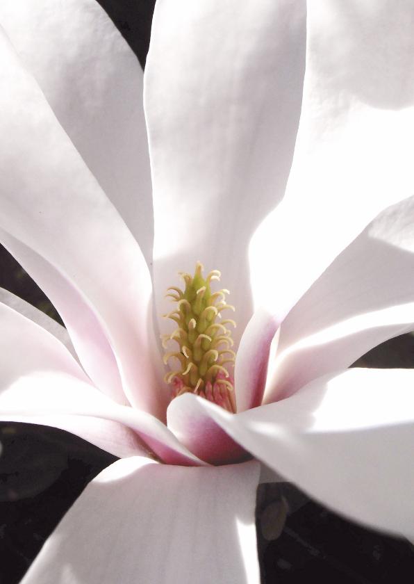 Bloemenkaarten - Magnolia bloem