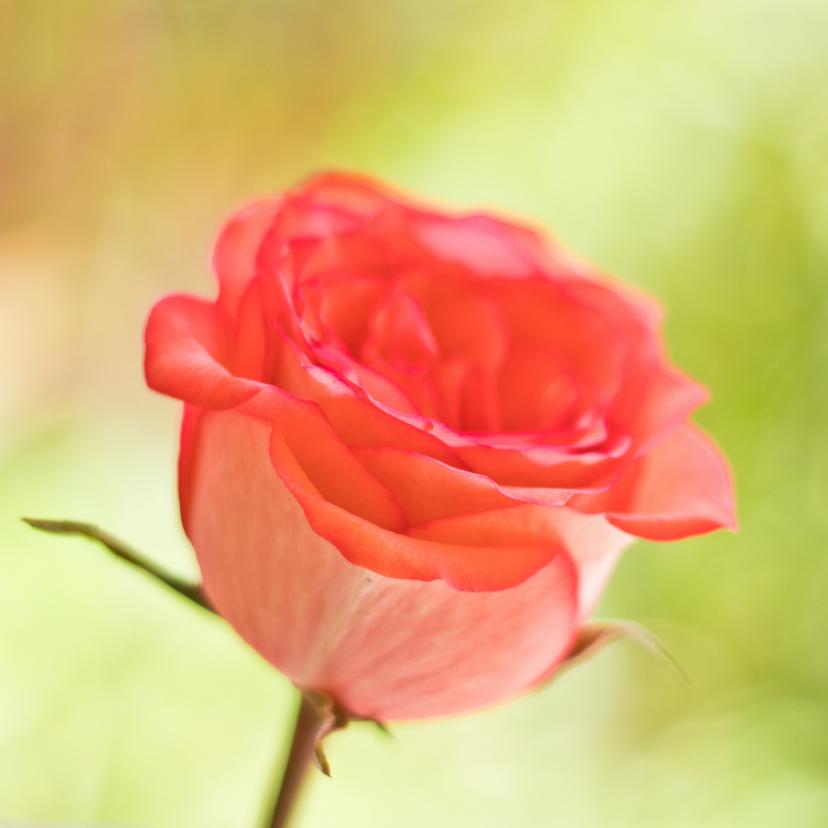 Bloemenkaarten - Moederdag kaart met een roze roos op een groene chtergrond
