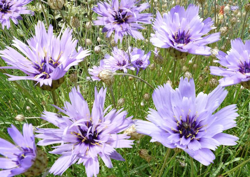 Bloemenkaarten - Mooie blauwe bloemenkaart