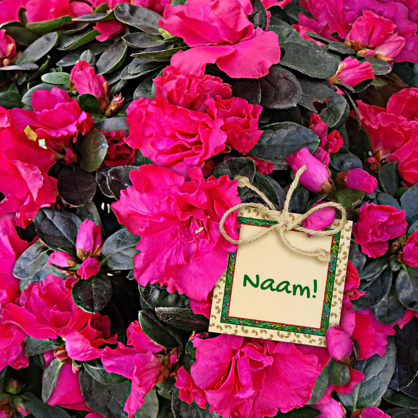 Bloemenkaarten - Mooie bloemenkaart Azalea Mollis en labeltje met tekst